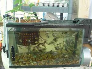 aquaponics44